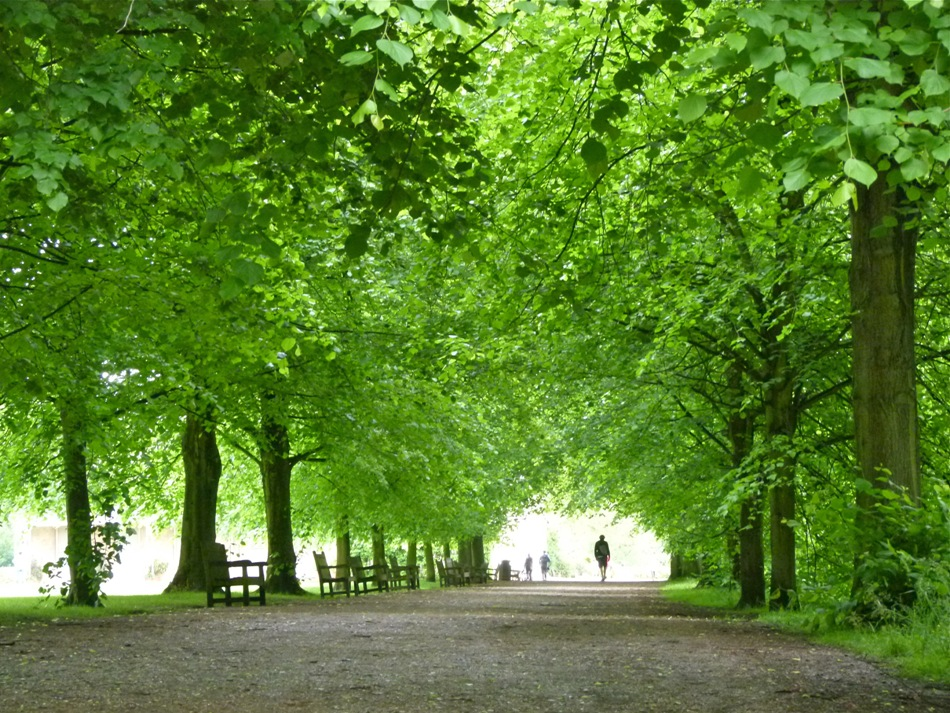 Green trees of Hampstead of Heath